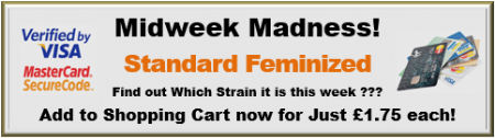 Midweek Madness Standard Female Cannabis Seed Special Offer Marijuana Strains from £1.75 each